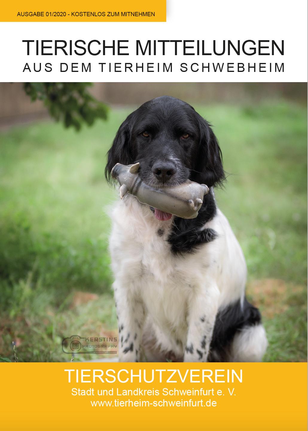 Tierheimzeitung Tierheim Schwebheim
