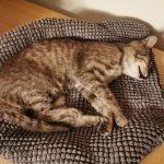 Katze-2021-08-04-225736.jpeg